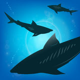 Sharks under water. Stock Images