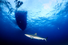 Sharks underneath a boat Royalty Free Stock Images