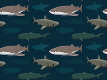 Sharks Wallpaper 11 Stock Images