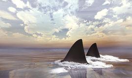 Sharks in Water Stock Photo