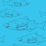 Sharks in the water. Black outline on the blue background. Sketc Stock Photography