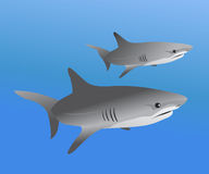 Sharks in water sealife. Illustration of two sharks isolated on blue background Royalty Free Stock Photography