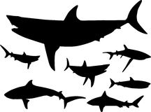 Sharks in the water Silhouette Royalty Free Stock Images