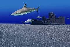 Sharkwreck Stock Image