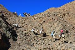 """Sharm el Sheikh, ÄGYPTEN-†""""am 15. Juni: Rolltreppenwohnwagen von Kamelen in den Bergen von Sinai blauer Hall am 15. Juni 2015 Stockbilder"""