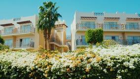 Sharm el Sheikh, Ägypten, im März 2017: Das Gebäude des Erholungsortes, im Vordergrund die üppig blühenden Büsche, Palmen A stock video