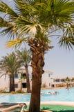 SHARM EL SHEIKH, ÄGYPTEN - 9. JULI 2009 Touristen im Pool gegen den Hintergrund von Palmen Lizenzfreie Stockbilder
