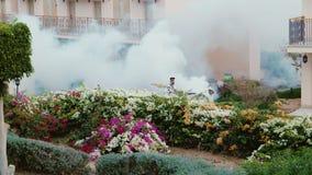Sharm El Sheikh, Египет, март 2017: Окуривание сада 2 работника курят кусты и деревья дыма цветя в акции видеоматериалы