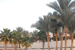 Sharm El Sheikh и деревья стоковая фотография
