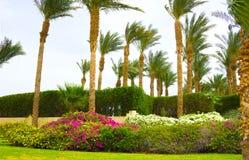 Sharm el Sheikh, Egipto - 11 de abril de 2017: El área del parque en el hotel cuatro Sharm el Sheikh del centro turístico de las  Foto de archivo libre de regalías