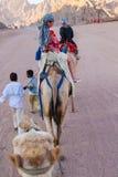 SHARM EL SHEIKH, EGIPTO - 9 DE JULIO DE 2009 Paseo de la gente en camellos en el desierto Fotos de archivo libres de regalías