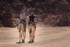 Sharm el-Sheikh, Egitto - 24 gennaio 2018: la gente che viaggia sui cammelli nel deserto dell'egitto Fotografie Stock