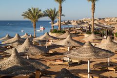 Sandy beach, sunbeds, umbrellas and warm water of Red Sea early in the morning in the suburb of Sharm el Sheikh stock photos