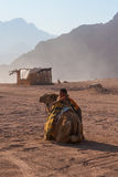 SHARM EL SHEIKH, EGYPT - JULY 9, 2009. boy stands next to a camel in the desert Stock Photos
