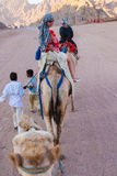 SHARM EL SHEIKH, EGYPT - JULY 9, 2009. People ride on camels in the desert royalty free stock photos