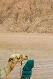 SHARM EL SHEIKH, EGYPTE - 9 JUILLET 2009 Le bédouin est un chameau dans le désert Images stock
