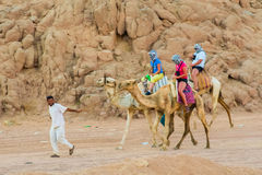 SHARM EL SHEIKH, EGYPTE - 9 JUILLET 2009 Tour de personnes sur des chameaux dans le désert Image stock