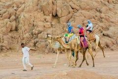 SHARM EL SHEIKH, EGYPTE - JULI 9, 2009 De mensen berijden op kamelen in de woestijn Stock Afbeelding