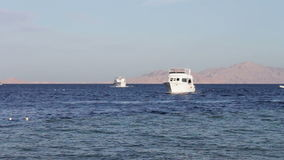 Sharm el-Sheikh, Sharks Bay, Egypt many beautiful white yacht stock video