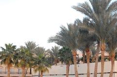 Sharm El Sheikh y árboles fotografía de archivo