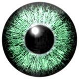 Sharp attractive deep green eye texture. Royalty Free Stock Photo