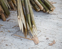 Sharp bamboo trunks. Very sharp bamboo trunks for garden fence Royalty Free Stock Images