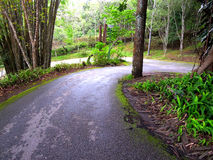 Sharp curve. Downhill road with a sharp curve goes through a forest stock image