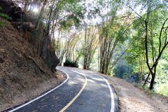 Sharp curve roads in bamboo forest. Roads in bamboo forest Chiang Mai Thailand stock images