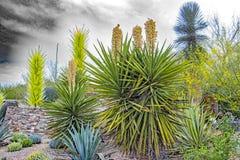 Sharp do deserto Fotos de Stock Royalty Free