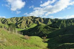 Sharp edges of green hills in zealand�s countryside. Green hills with steep sharp slopes during sunny day in winter time in New Zealand Royalty Free Stock Images