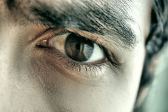 Sharp eye Royalty Free Stock Photo