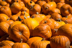 Sharp Focus on Pumpkins in the Front of a Massive Pile of Pumpkins for Halloween Royalty Free Stock Photography