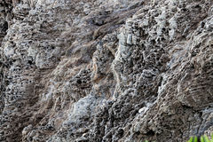 Sharp gray rocks on the beach Royalty Free Stock Photos