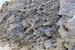 Sharp gray rocks on the beach Royalty Free Stock Image