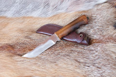 Sharp hunting knife. Lies on the skin of a Fox stock images