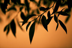 Sharp leaves of a tree on an orange background Stock Image