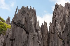 Sharp limestone. Detail of the Palawan coastline in Philippines stock images