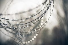 Sharp metal barbed wire wound in a spiral on a metal fence royalty free stock photo