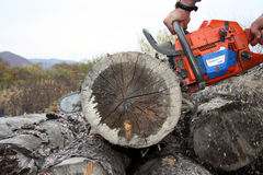 The sharp saw quickly cuts wood Stock Photo