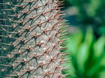 The sharp spike that made from nature. Close-up Green Cactus Thorn Detail with blurring green background, The Morning in the desert plants garden Royalty Free Stock Image