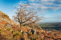 Sharp Tor on Bodmin Moor Royalty Free Stock Image