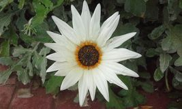 Sharp white  orange flower Stock Photos