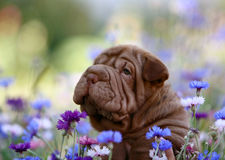 Sharpay closeup portrait in flowers Stock Photography