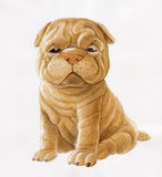 Sharpei Royalty Free Stock Photography