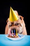 Sharpei dog celebrating birthday Stock Photo