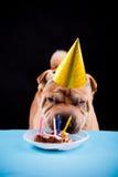 Sharpei dog celebrating birthday Royalty Free Stock Photos