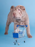Sharpei puppy with empty shopping cart Royalty Free Stock Images