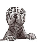 Sharpei sketch Royalty Free Stock Photography