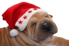 Sharpei van de kerstman Royalty-vrije Stock Afbeeldingen