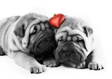 Sharpei Welpen in der Liebe Lizenzfreie Stockbilder